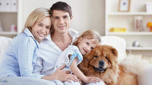 Wills & Trusts dog-young-family Direct Wills Looe
